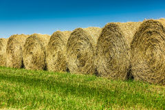 Yellow hay in a field Stock Image
