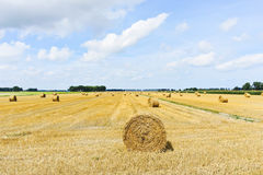 Yellow haystack rolls on harvested field. In Normandy, France stock image