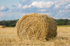 Yellow haystack on wheat field under the beautiful blue cloudy sky stock image
