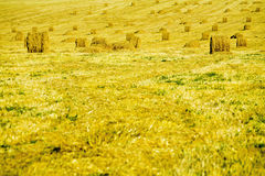 Yellow haystacks Stock Photo