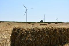 Yellow haystacks on field Royalty Free Stock Photo