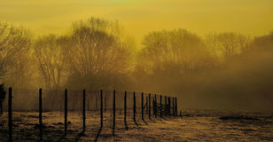 Yellow Haze. Taken early morning springtime in the UK royalty free stock images