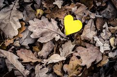 Yellow heart and nature. Royalty Free Stock Photos