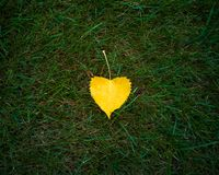Yellow leaf on green grass royalty free stock photography