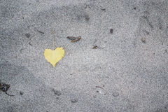 Yellow Heart Shaped Leaf On Sandy Beach. Photo of single yellow heart shaped leaf on sandy beach Stock Image