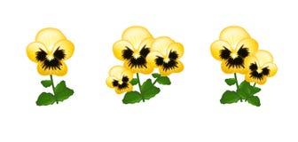 Yellow heartsease Stock Photo