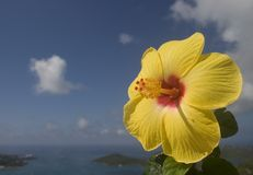 Yellow hibiscus. With island tropical background of the sky Royalty Free Stock Photo