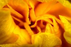 Yellow hibiscus flower Royalty Free Stock Photos