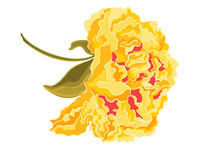 Yellow hibiscus full of flowers Royalty Free Stock Photo