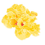 Yellow hibiscus full of flowers Royalty Free Stock Images