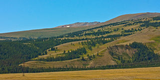 Yellow hill and rock Altai mountain in ice Royalty Free Stock Images