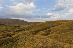 Yellow hills,blue sky,white clouds. Royalty Free Stock Image