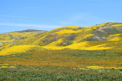 Yellow Hills Stock Photography