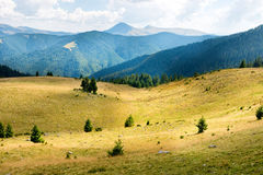 Yellow hills with trees and sunlight spots Stock Photos