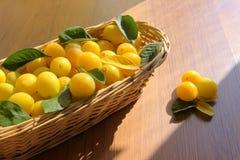 Yellow honey plum royalty free stock photo