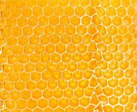 Yellow honeycomb Royalty Free Stock Photos