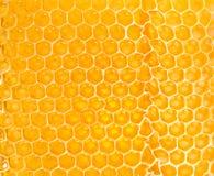 Yellow honeycomb Royalty Free Stock Photos