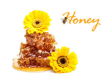 Yellow honeycomb Stock Image