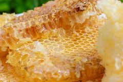 Yellow honeycomb cells closeup stock photography