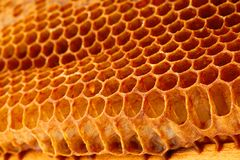 Yellow Honeycomb closeup background Stock Image