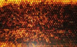 Yellow honeycomb on frame with fresh honey Stock Photo
