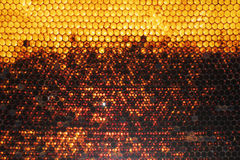Yellow honeycomb on frame with fresh honey Stock Images