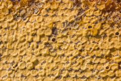 Yellow honeycomb. Natural texture of honeycombs. Ine is fresh honey, on top is a layer of beeswax. Warm shades, daylight Royalty Free Stock Photography
