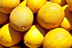 Yellow honeydew melons. A pile of sweet fresh honeydew melons Royalty Free Stock Photo