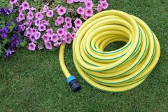 Yellow hose pipe on a grass. In a garden royalty free stock images