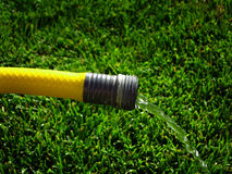 Yellow Hose Squirting Fresh Water on Grass Stock Images
