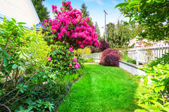 Yellow house backyard area with  blooming rhododendron Royalty Free Stock Photo