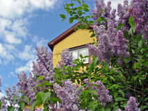 Yellow house with lilacs. Yellow house against blue cloudy sky with lilacs in front Royalty Free Stock Images