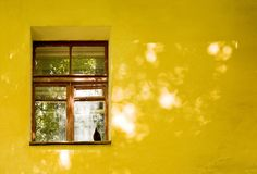 Yellow house wall and window. Yellow colorful house wall and window with pigeon bird Royalty Free Stock Photography