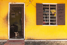 Yellow house and watchdog Stock Image