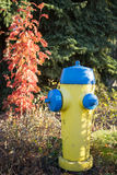 Yellow Hydrant Stock Photography