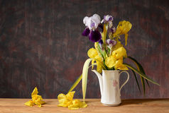 Yellow iris in a ceramic vase Royalty Free Stock Photography