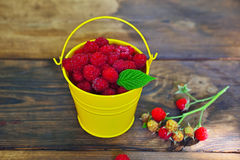 Yellow iron bucket full of red ripe raspberries Royalty Free Stock Photos