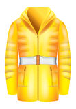 Yellow  jacket Stock Image