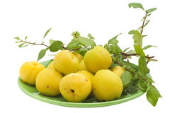 The yellow Japanese  Quince Stock Photography