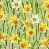 Yellow jonquil daffodil narcissus seamless pattern. Yellow white jonquil daffodil narcissus seamless pattern, beige background Stock Images