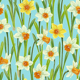 Yellow jonquil daffodil narcissus seamless pattern. Yellow white jonquil daffodil narcissus seamless pattern, blue background Stock Image