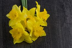 Yellow jonquil flowers. On dark wooden background stock photography