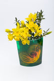 Yellow jonquil flowers. Isolated on white background royalty free stock photography
