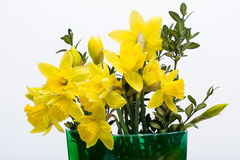 Yellow jonquil flowers. On white background stock photo