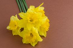 Jonquil flowers stock photo