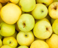Yellow juicy fresh apples background. Stock Photos