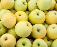 Yellow juicy fresh apples Stock Photography