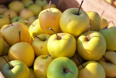 Yellow juicy fresh apples background. Stock Photo