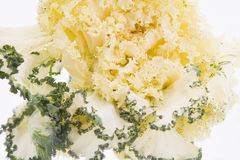 Yellow Kale Royalty Free Stock Photos