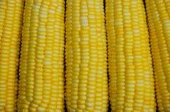 Yellow Kernel of Fresh Sweet Corn Stock Photo